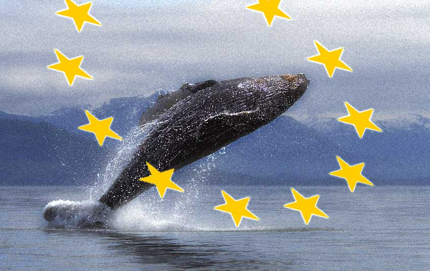 Beaten by Whales – memories of Brexit week