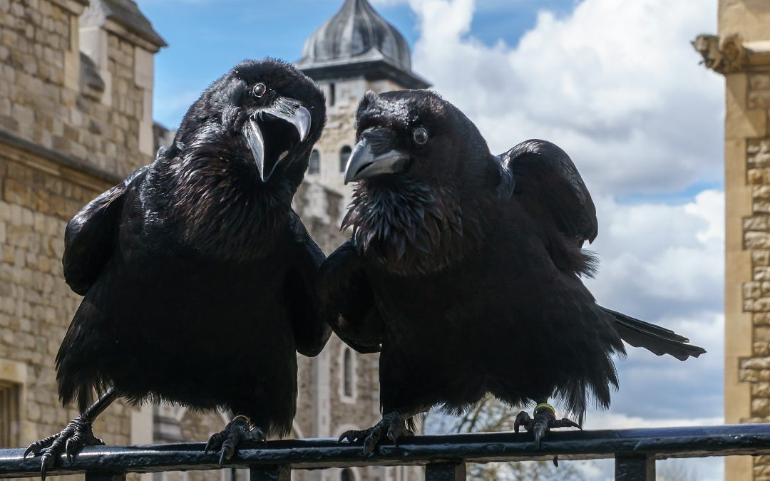 Ravens of the Tower decide to hop it in Brexit exodus shock.